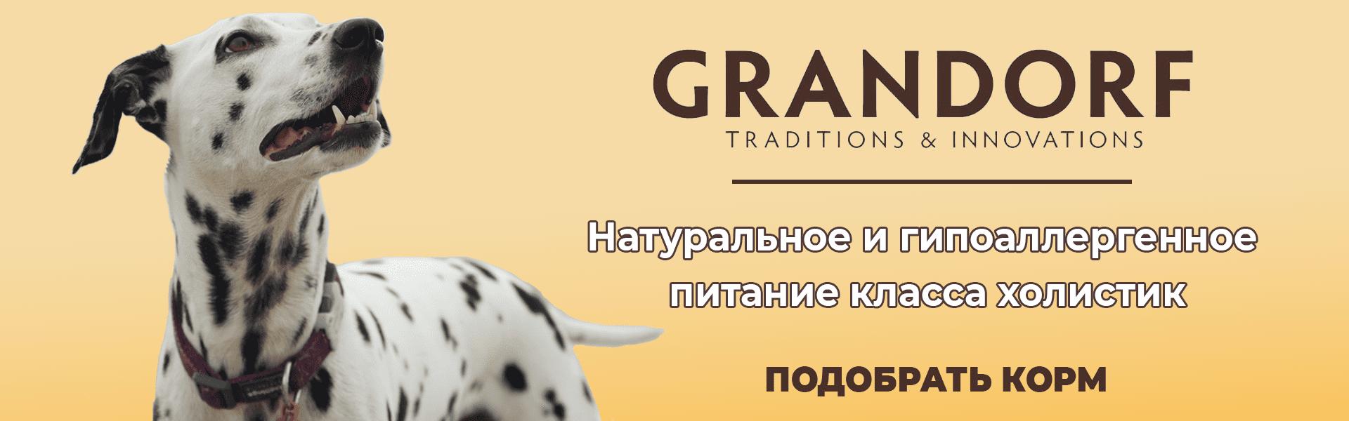 Grandorf dog