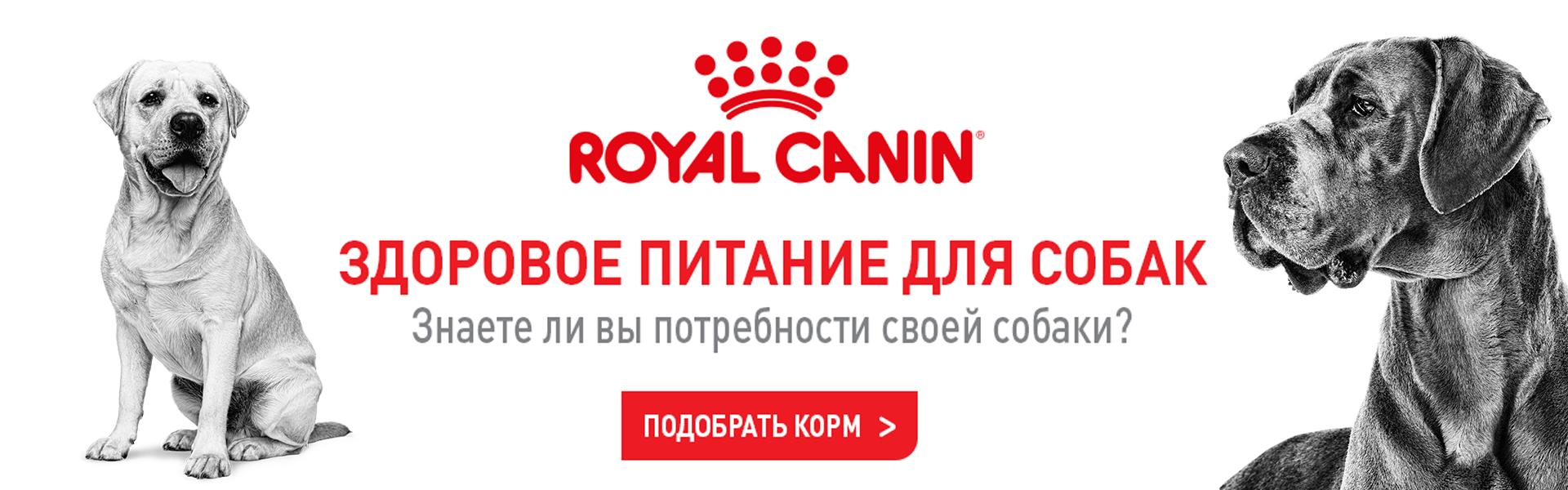 Royal Canin Dog