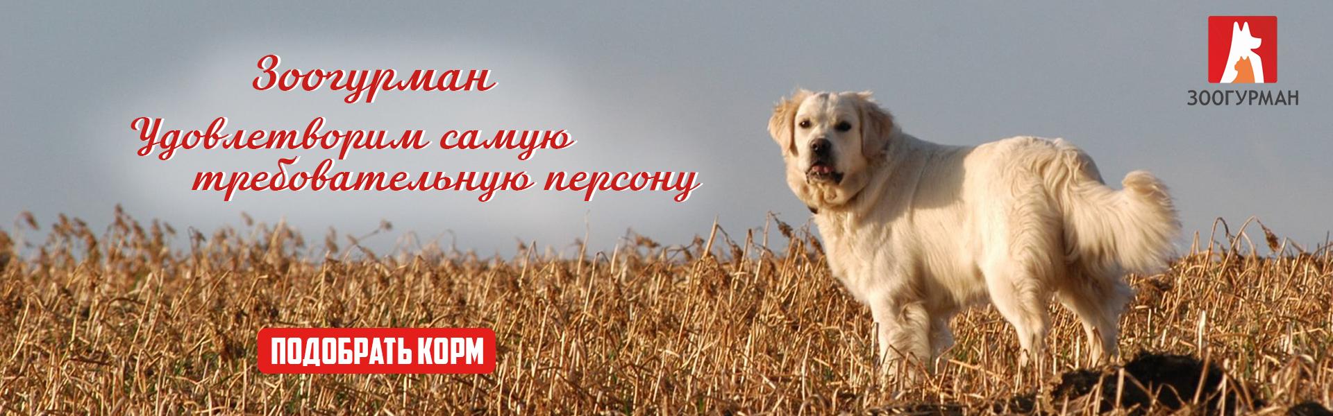 Слайд Зоогурман для собак